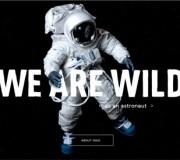 wild webdesign