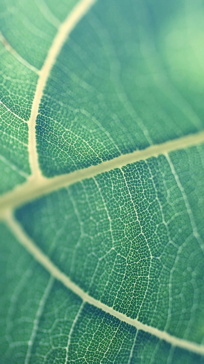 Green-leaf-bokeh