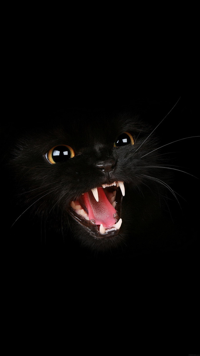 Black Cat Roar